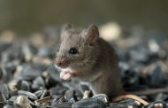 Protect Your Pet From A Rodent Infestation