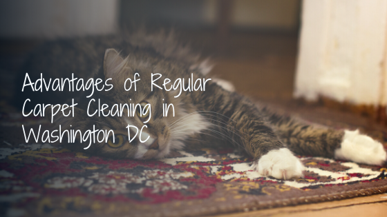 Advantages of Regular Carpet Cleaning in Washington DC