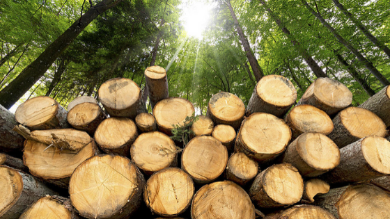 5 Smart Ways to Access Free Firewood Easily