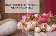 Most Beautiful Flowers All Around the World