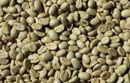 Advantages of Drinking Green Coffee in Our Daily Life