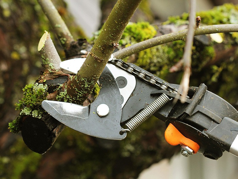 Top Incredible Reasons for Trimming Your Trees During COVID-19