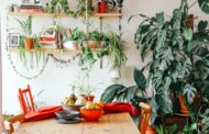 Best Ideas to Make Your Indoor Garden Attractive with Some Mini Tree